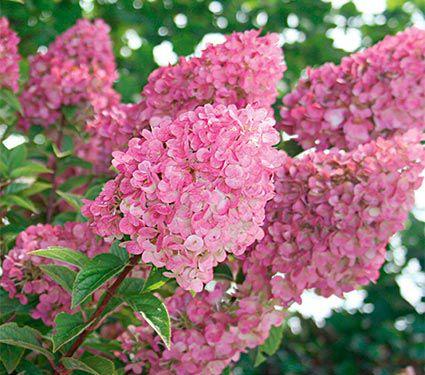 Pam S Plant Picks