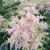 Astilbe - Pink Lightning  Light: Part Shade  Zone: 4 Size: 2'X2' Bloom Time: July  Color: Pink Soil: Rich, Moist, Organic