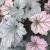 "Coral Bells - Frosted Violet  Light: Sun/Part Shade Zone: 3 Size: 24-30"" Bloom Time: May-June Color: Pale Pink Soil: Moist, Well-Drained"